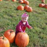 Little pumpkin in the patch