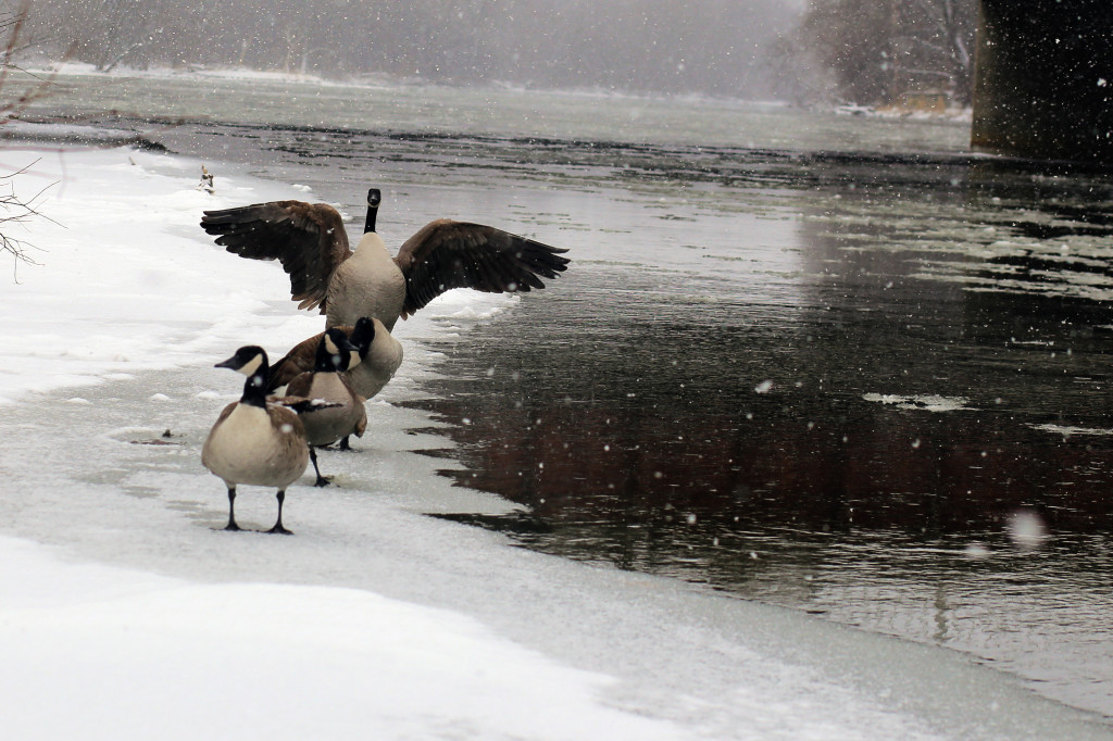 021416geese
