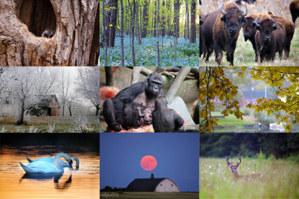 Top photography moments of 2018
